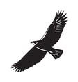 American Eagle Flying Woodcut vector image vector image