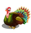 fat gobbler isolated on white background vector image vector image