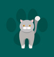 grey cat with yellow eyes flat pet paw mark vector image