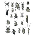 insects vector image