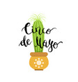 with cactus in pot and cinco vector image vector image
