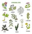 antimicrobial herbs hand drawn set medicinal vector image vector image