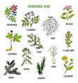 antimicrobial herbs hand drawn set of medicinal vector image vector image