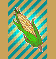 corn maize cob appetizing vegetarian product vector image
