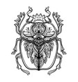 scarabaeus sacer dung beetle sacred symbol in vector image