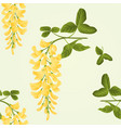 seamless texture laburnum branch decorative shrub vector image vector image