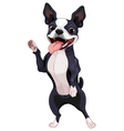 Boston Terrier standing vector image vector image