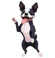 Boston Terrier standing vector image