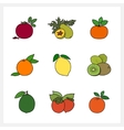 Citrus Fruit and Fruit Growing on a Trees vector image vector image