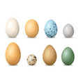 realistic detailed 3d colorful bird eggs set vector image