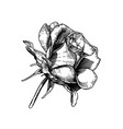 black and white rose flower vector image