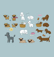 cute cartoon pug poodle and dachshund dogs and vector image vector image