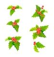 mistletoe christmas plants set with leaves vector image vector image