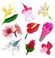 set of tropical flowers in realistic style vector image vector image
