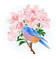 small songbirdon bluebird thrush vector image