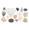 collection of various corals and seaweed or algae