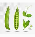 green peas 3d green vector image vector image