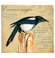 Hand painted Bird Magpie vector image