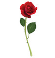 red rose isolated on white 3d vector image