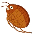 Flea cartoon vector image