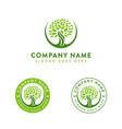 minimalist elegant oak tree logo old tree logo vector image vector image
