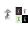 olive tree logo design template for oil vector image vector image