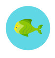 sea fish flat icon vector image