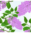 seamless texture lilac twig with flowers vector image vector image