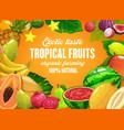 tropical fruits farming cartoon poster vector image vector image