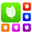 two basil leaves set color collection vector image