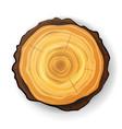 cross section tree wooden stump tree round vector image