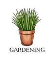 green grass in pot vector image