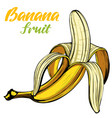 bananas fruit hand drawn color vector image vector image