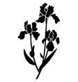 black silhouettes of iris vector image