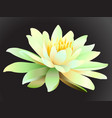 lotus flower on dark background vector image vector image