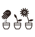 flower planting vector image vector image