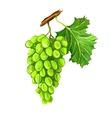 grapes fruit hand drawn vector image