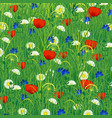 summer meadow with herbs and flowers vector image