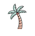 palm with coconuts and leaves vector image