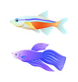 colorful sea inhabitant neon tetra and betta fish vector image