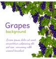 Grapes background wallpaper vector image