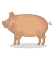 pig animal farm icon vector image vector image