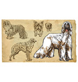 Animals theme DOGS as a national treasure - pack vector image vector image