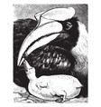 female hornbill laying down feeding her young vector image vector image