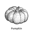 hand-drawn pumpkin vector image