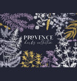 traditional provence herbs banner design frame vector image