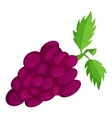 Bunch of grapes icon cartoon style vector image vector image