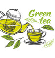 green tea cup tea and teapot isolated on white vector image vector image