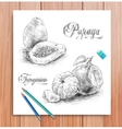 realistic sketch of fruits kiwi and melon vector image vector image