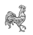 Rooster Vintage black engraving vector image vector image